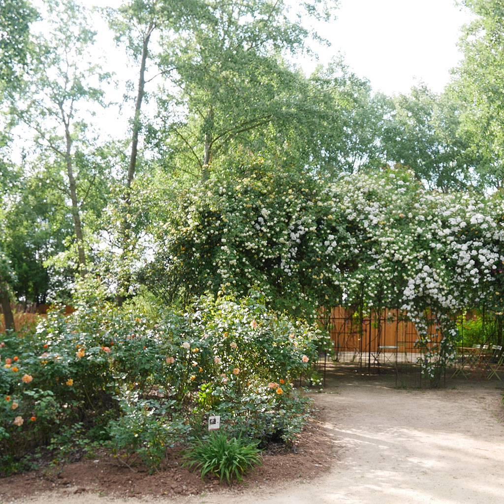 Apéro-jardin : savourez votre moment détente à la roseraie