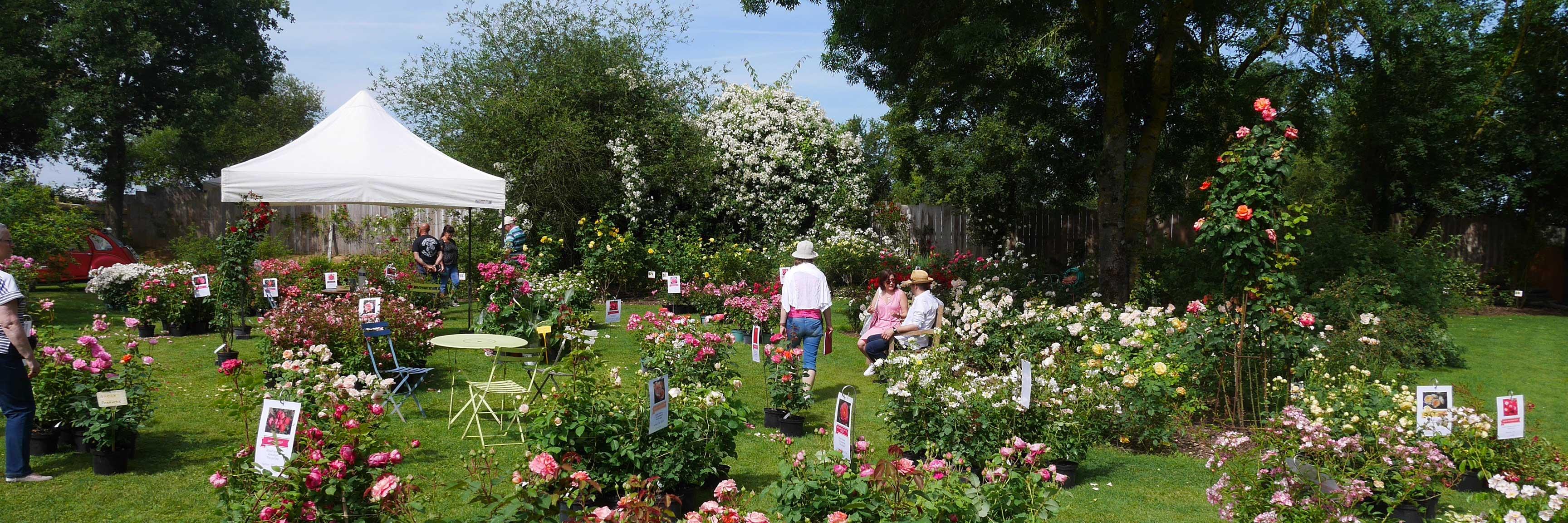 Les chemins de la rose : la fête des plantes
