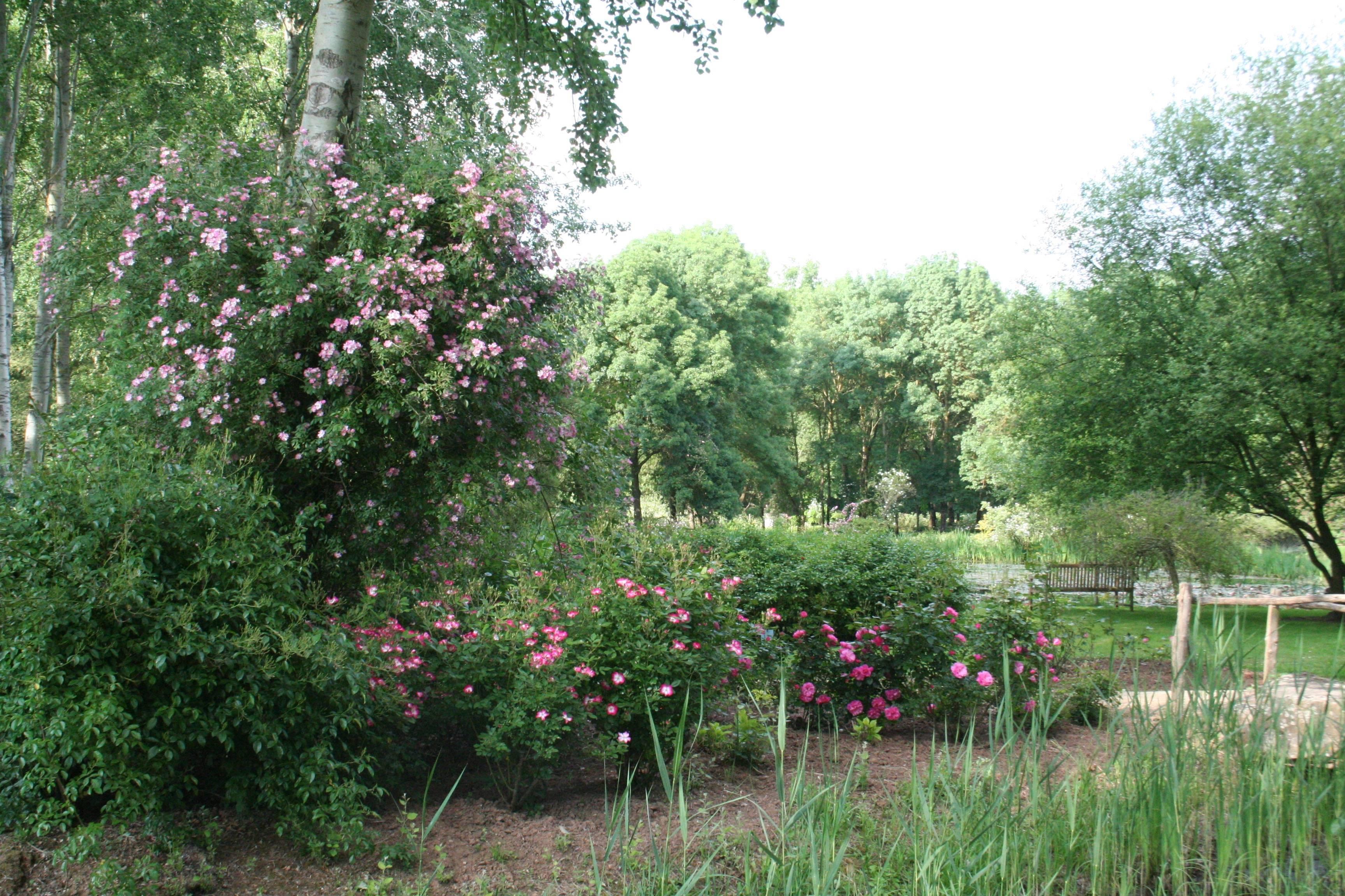 Découvrir le jardin de la roseraie les chemins de la rose