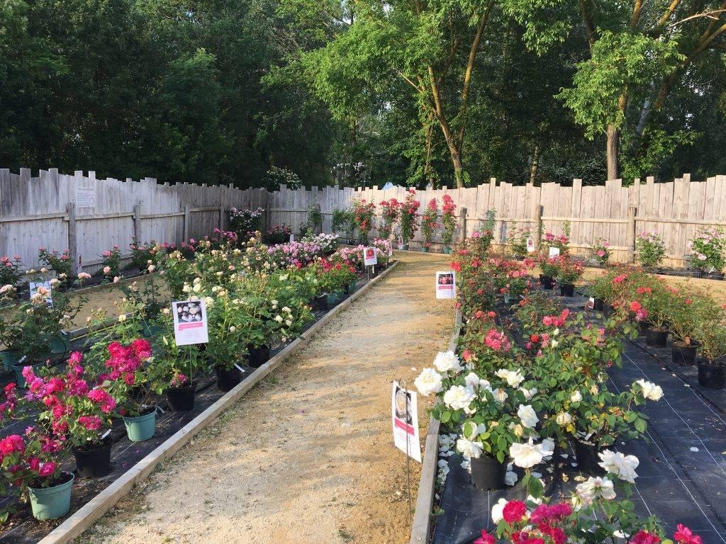 Découvrir le jardin et les variétés de roses