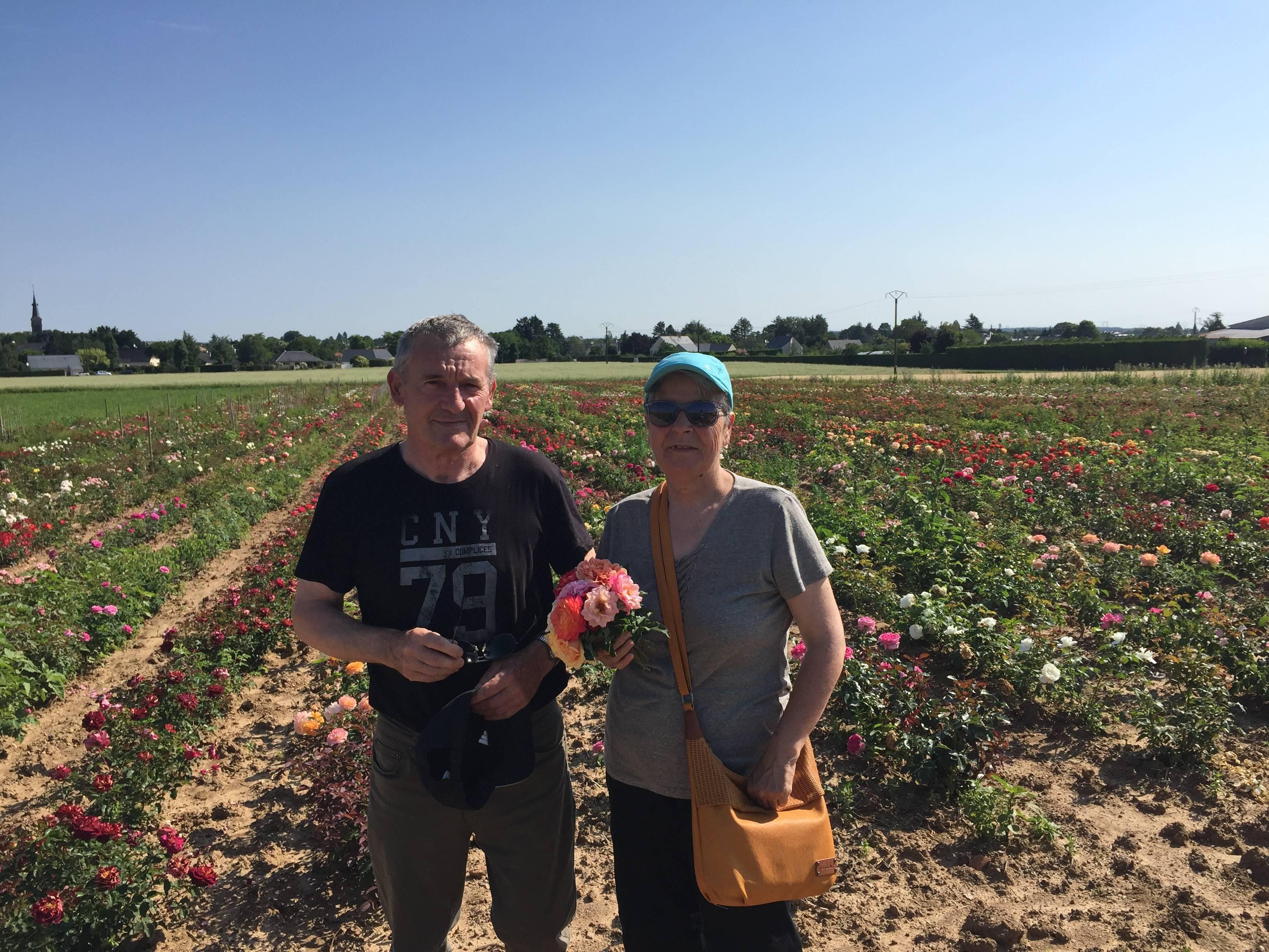 Vente de rosiers
