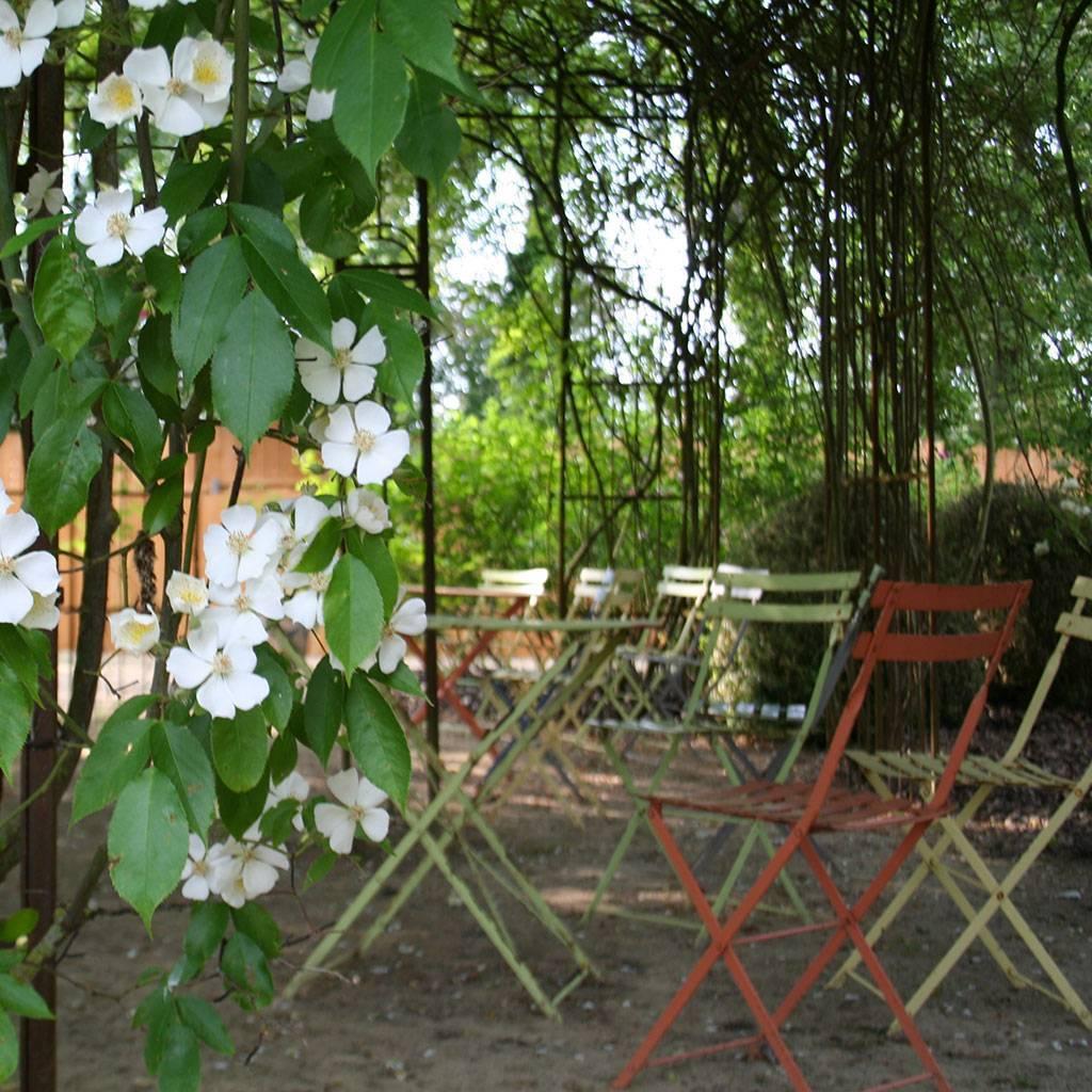 Visitez la roseraie de Doué-la-Fontaine en groupe