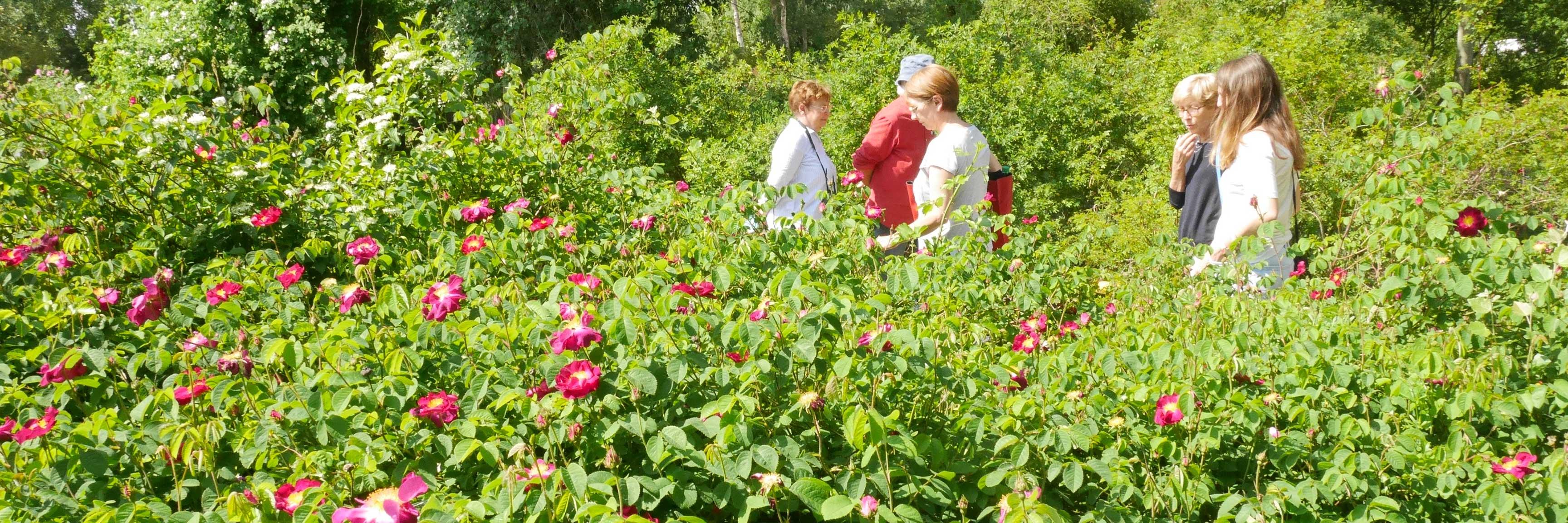 Visite de la roseraie de Doué-la-Fontaine en groupe