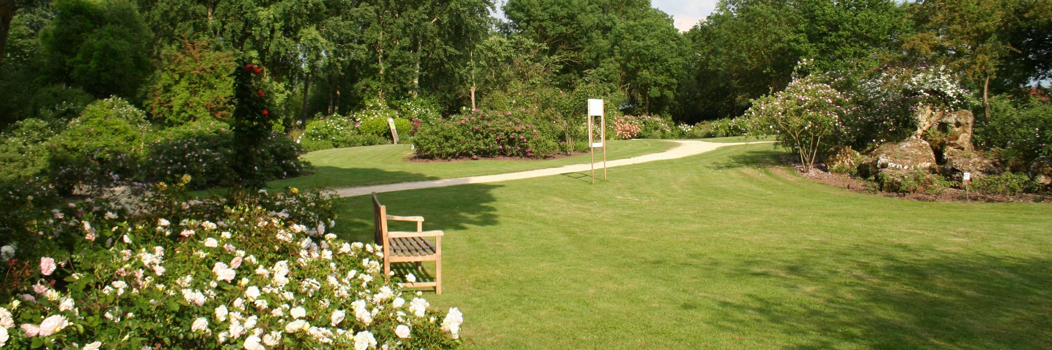 Visite en solitaire du jardin des roses de Doué-la-Fontaine