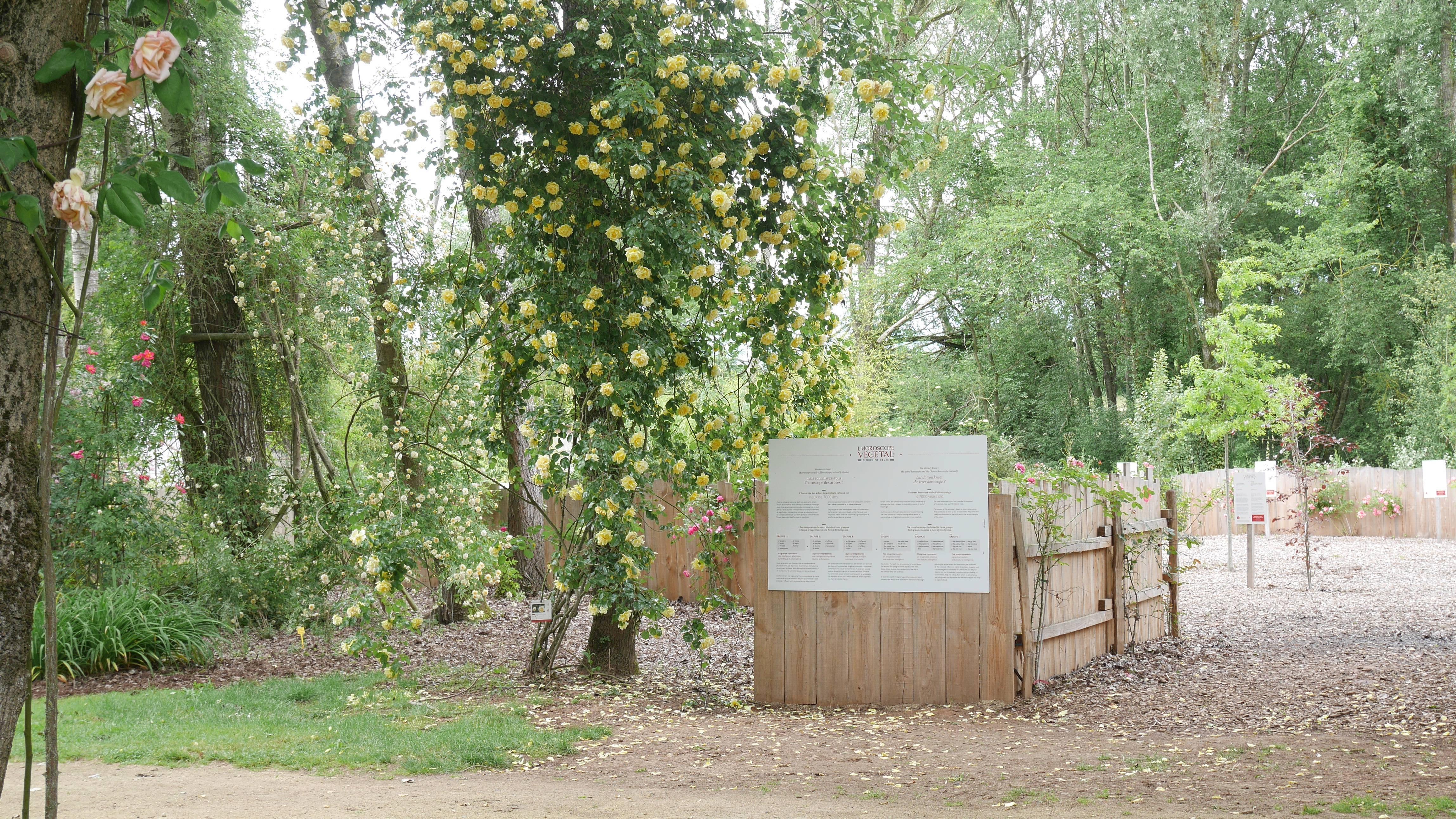 L'horoscope végétal de la roseraie de Doué-la-Fontaine
