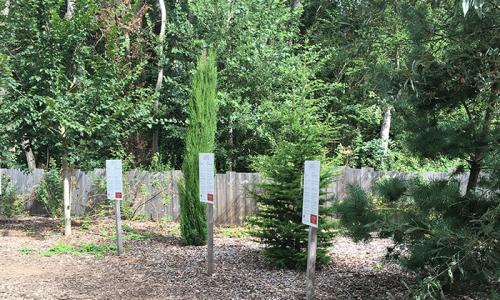 La roseraie naturelle de Doué-la-Fontaine